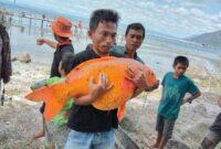 Isu penangkapan ikan mas berukuran besar di Danau Toba