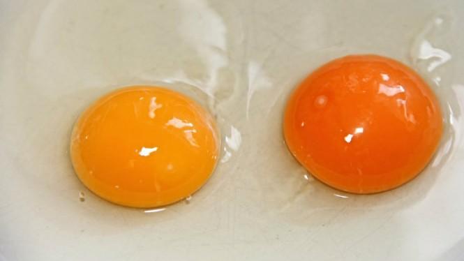 tanggal 9 Oktober rupanya menjadi perayaan Hari Telur Sedunia
