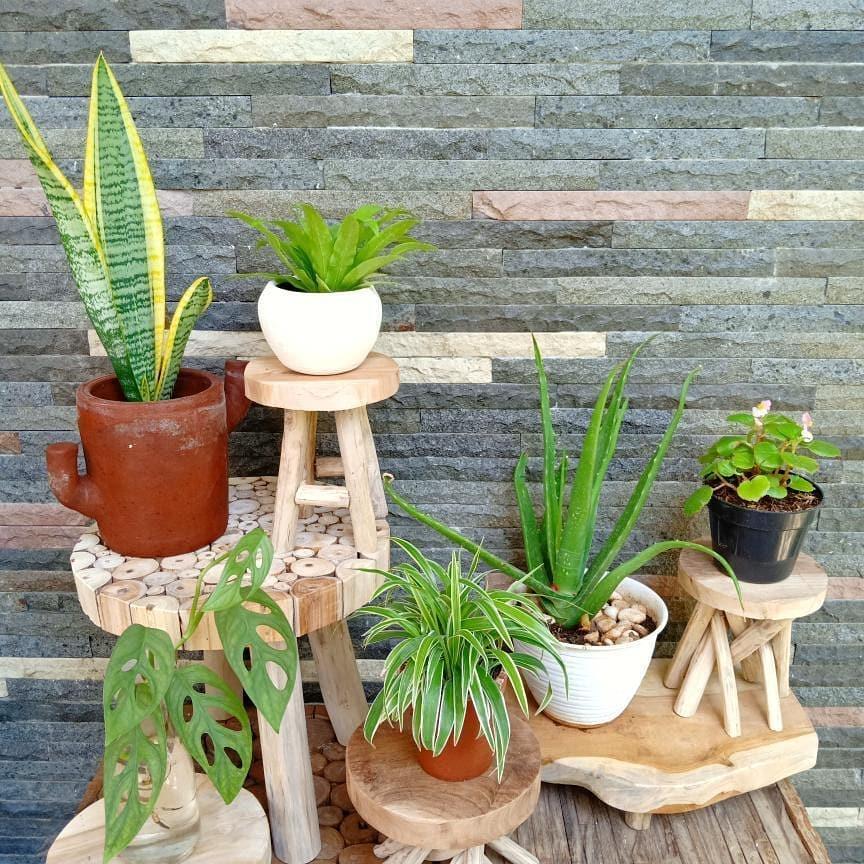 tanaman hias juga dapat membuat rumah jadi adem dan asri